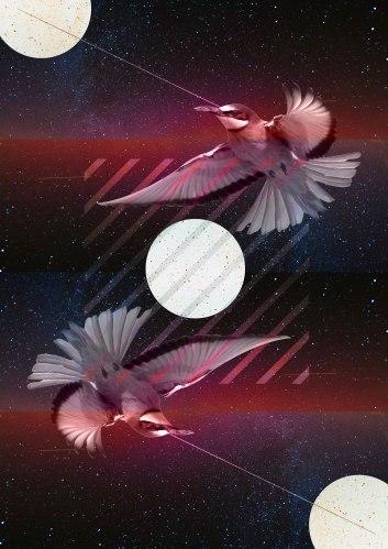 oiseau_space